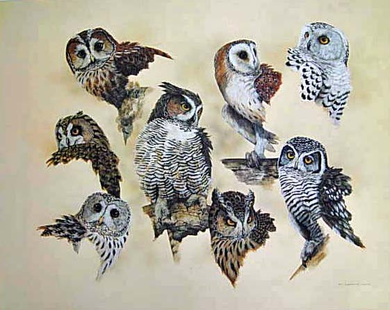 My Favourite Owls $100
