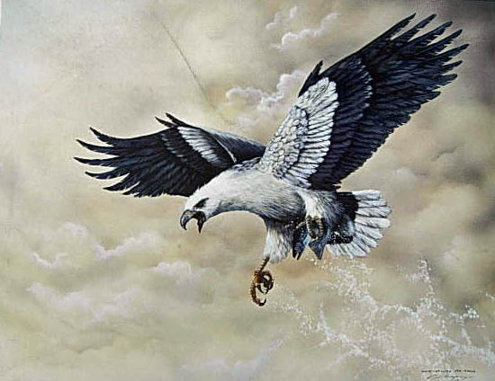 White Bellied Sea Eagle $80