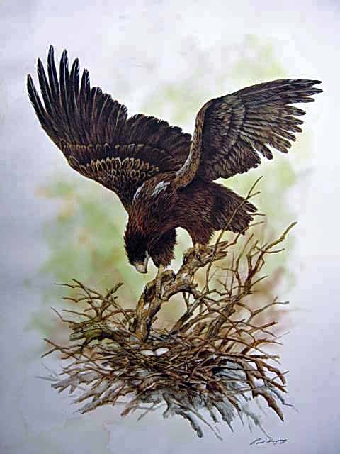 Wedgetailed Eagle With Eggs $90
